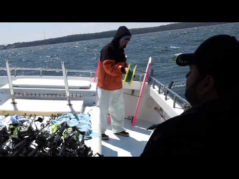 Setting Out Planer Boards for Rockfish Apr 2014