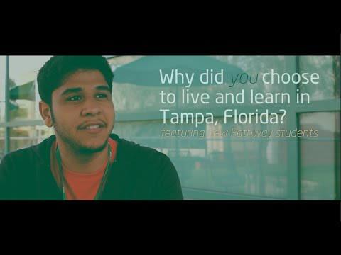 INTO USF | Why Choose to Live and Learn in Tampa