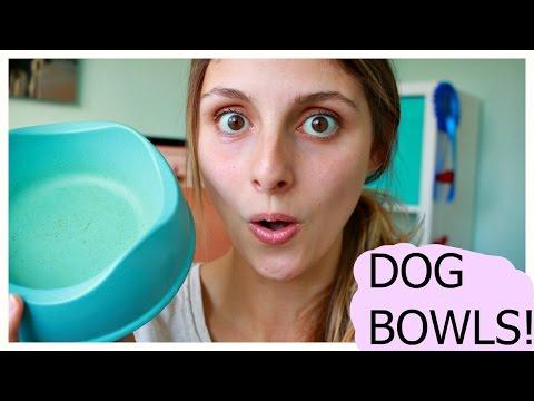Best dog bowl - Beco Bowl UK
