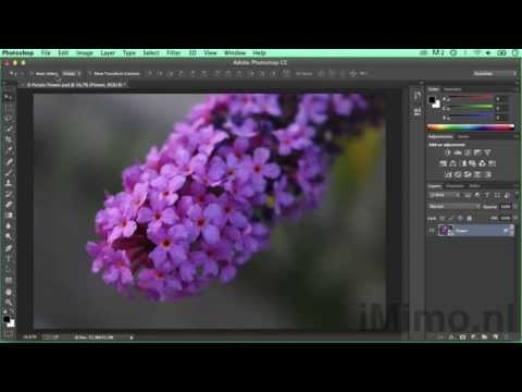 Adding Copyright & Contact Information to Images in Photoshop