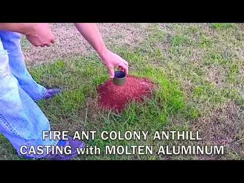 BURNING HOT MOLTEN ALUMINUM FIRE ANT HILL CASTING FIREANT REVENGE VIDEO