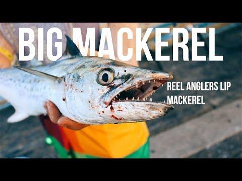 Rare Huge Mackerel Galveston Texas Surf Fishing | Big Spanish Mackerel | Beach Pier Fishing