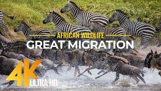 4K African Wildlife - Great Migration from the Serengeti to the Maasai Mara, Kenya (2160p 4k)