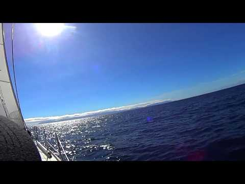 Marina Cup - Sailing from Long Beach to Avalon Catalina