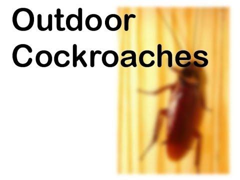 ETX-Outdoor Cockroaches