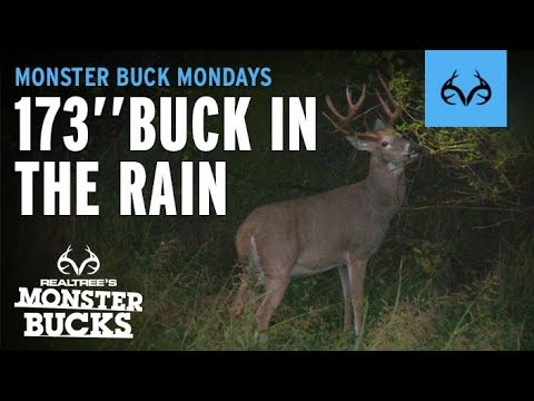 Hunting In The Rain   Giant Whitetail Buck
