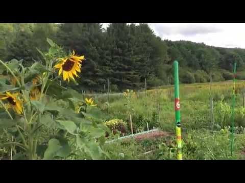 New Hampshire Community Garden - Patio Gardeners on Vacation 2016