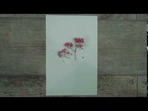 How to create a simple picture or card with dried flower