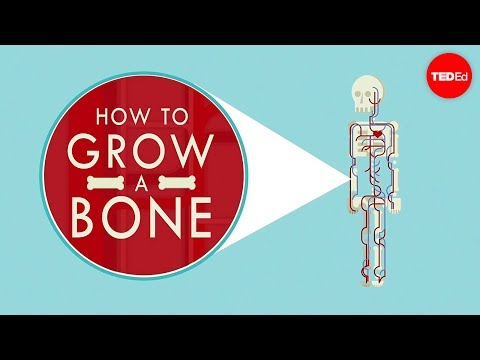 How to grow a bone - Nina Tandon