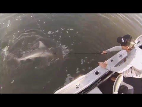 Gold Coast Bull Sharks April 2016