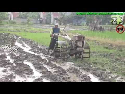 Plowing Rice Paddy Field Using Yanmar Two Wheel Tractor