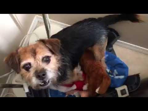 Help my dog get unstuck!!!
