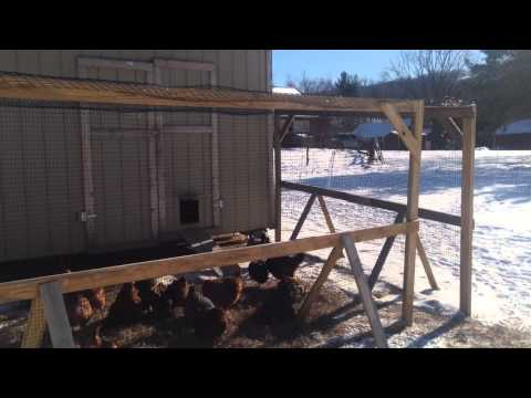 Increasing laying chicken egg production winter