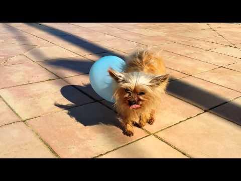 STATIC ELECTRICITY on a DOG!!