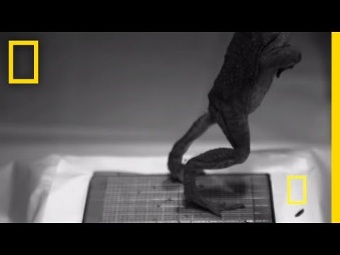Frog Jumps Caught in Slow-Motion | National Geographic