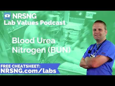 Blood Urea Nitrogen BUN Nursing Considerations, Normal Range, Nursing Care, Lab Values Nursing