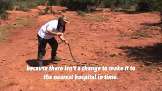 Download black mamba free handle by yiannis angeli. african most venomus snakes Video