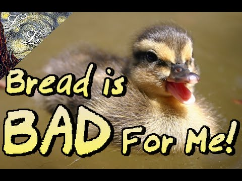 The Do's and Don'ts of Duck Feeding | ALifeLearned