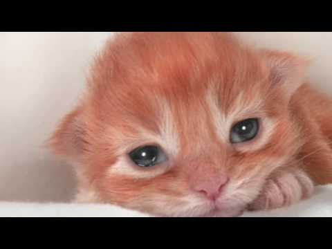 Eye Infection in Newborn Cats | Cat Care Tips