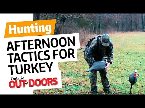 Afternoon Tactics for Turkey