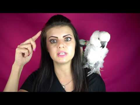 Amazing Trick and Other Tips To Stop Your Parrot From Chewing Things (Q&A)| PARRONT TIP TUESDAY
