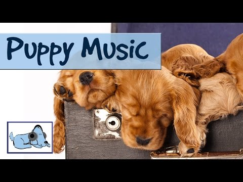 Puppy Music - Music and Sounds Designed for Puppies: Improve Separation Anxiety, Stop Crying Dogs.