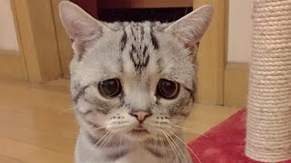 Saddest Cat in the World is a furball of pure sorrow; Kitten trapped behind glass wall - Compilation