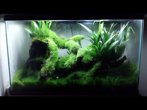 waterless aquarium (?) or terrarium