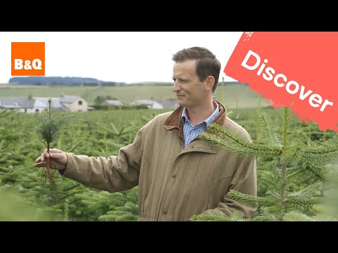 The journey of our real Christmas trees