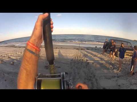 Beach Fishing For Sharks!