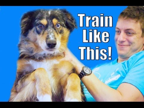 Your Dog Doesn't Listen? Train Like This!