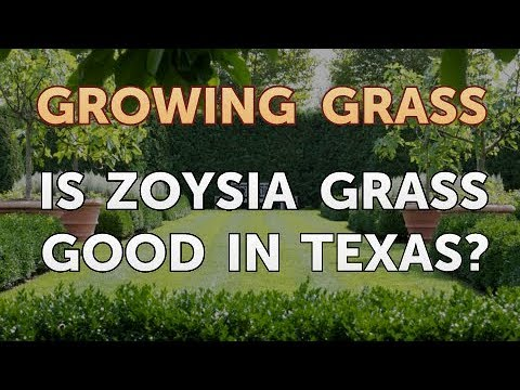 Is Zoysia Grass Good in Texas?