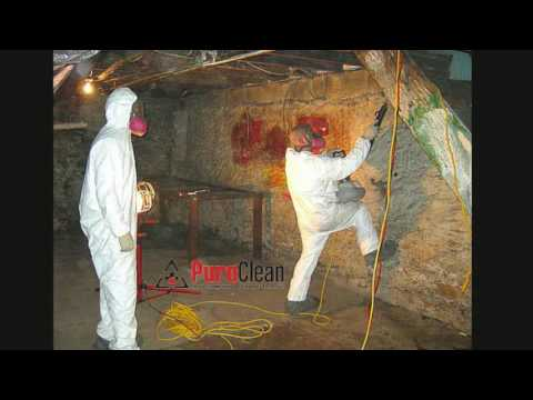 We Remove Basement Mold Safely