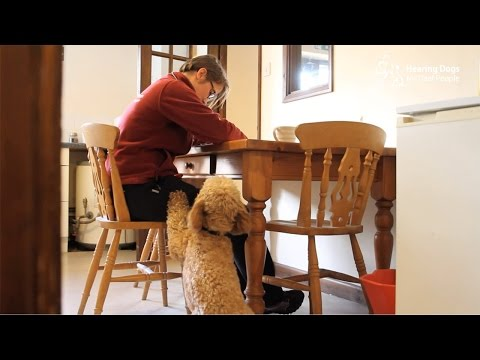 How does a hearing dog alert a deaf person to the doorbell?
