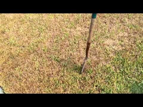 Brown Grass In Summer