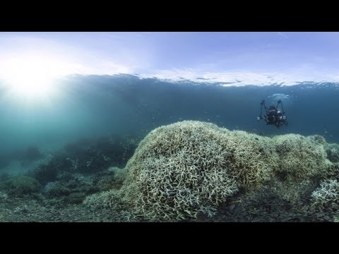 We're Killing Coral Reefs Faster Than Ever - Newsy