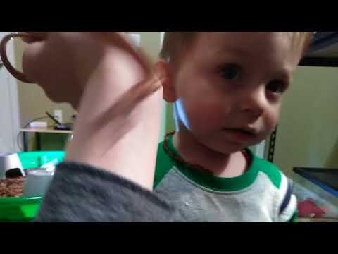 Filler Video Of My Animals