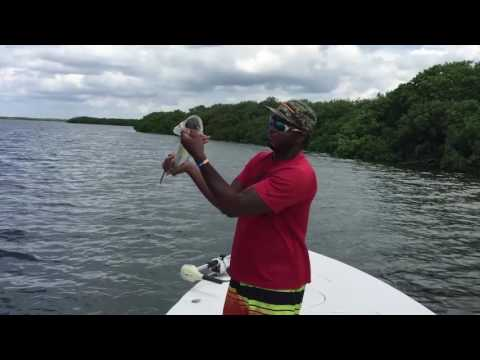 Tampa Bay Flats Fishing for redfish and snook
