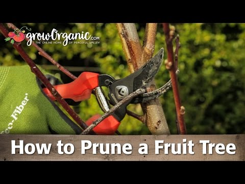 How to Prune Organic, Bare Root Fruit Trees