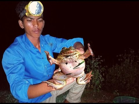 Catch Frog by Hand at Night in Cambodia