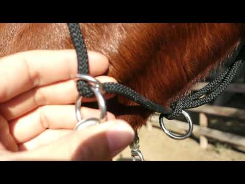 Knot Just Rope - Custom Rope Halter Review