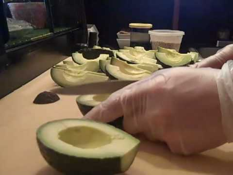 Best Way To Cut Avocados  Sushivids.com