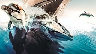 THE DOLPHINS WENT CRAZY FOR OUR YACHT! | VLOG³ 33