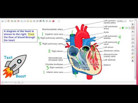 Blood Flow Through the Heart: Test Boost for SAT Subject Test in Biology