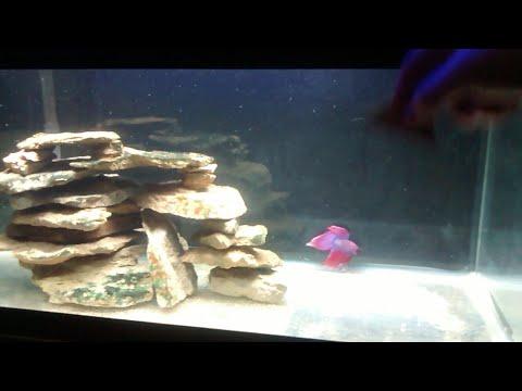 How to clean inside glass aquarium