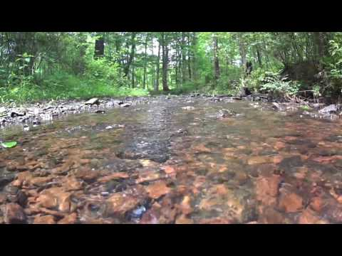 Pine Run Creek