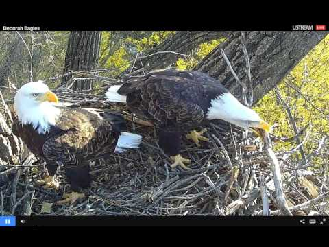 Decorah Bald Eagles 10 20 2015 Tuesdays Team Work