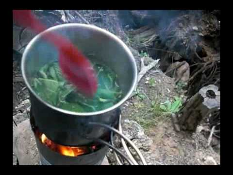 Edibles:Stinging Nettle Good Nutritious