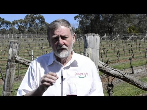 Recycled water at Gisborne Peak Winery