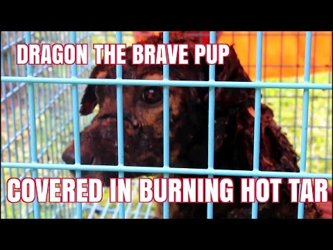 Dragon - The Brave Puppy Covered In Hot Tar